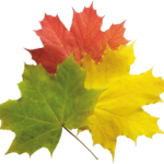 1-autumn-png-leaves