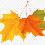 kisspng-maple-leaf-autumn-clip-art-hand-painted-autumn-leaves-5ad9c30226c582.1968569015242206741588